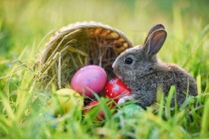 Easter Family Special